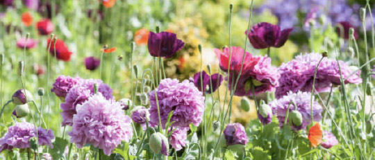 holmwood norfolk care home garden
